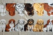 6 süße Hunde von vorne und von hinten