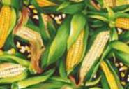 Patchworkstoff, Mais, Farmer John´s Garden, Gemüse, Küche